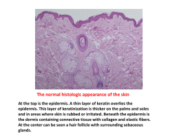 Skin Pathology