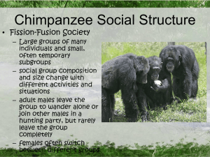 Chimpanzee Social Structure