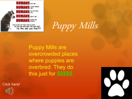 Puppy Mills powerpoint