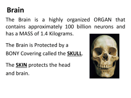 Notes: Brain Parts and Functions (ppt)