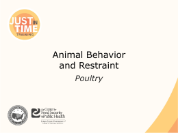 Animal Behavior and Restraint: Poultry