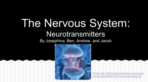 The Nervous System: Neurotransmitters By Josephina