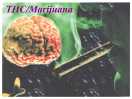 Marijuana - UCSD Cognitive Science