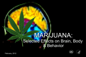 Marijuana: Select Effects on Brain, Body and