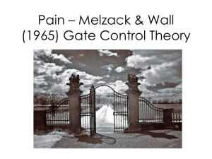 Pain – Melzack & Wall (1965) Gate Control Theory