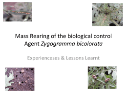 Mass Rearing of the biological control Agent Zygogramma