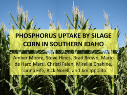Phosphorus uptake by silage corn in southern Idaho