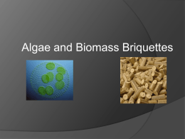 Algae and Biomass Briquettes