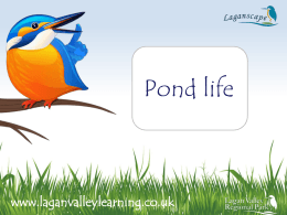Ponds - Lagan Valley Learning