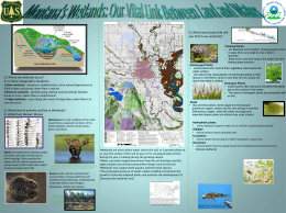 Wetlands Project Part 3