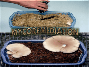 Mycoremediation