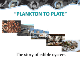 Plankton to Plate: The story of edible oysters