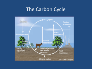 Carbon Cycle Power Point