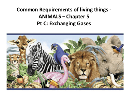 Requirements of Animals Ch 5 Pt C  - SandyBiology1-2