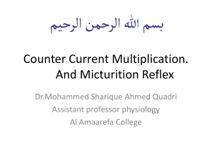 counter current multiplication and micturation