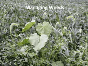 11 * Management options for weeds