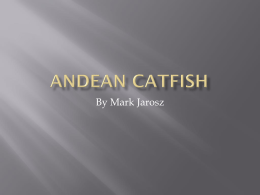 ANDEAN CATFISH 1