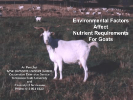 Environmental Factors Affect Nutrient Requirements for Goats