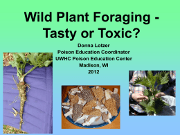 Wild Plant Foraging - Tasty or Toxic?