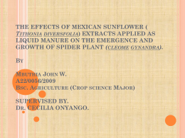 the effects of mexican sunflower extracts applied as liquid manure