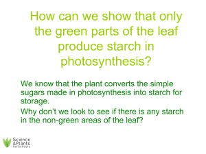 PSG11 - Which part of a leaf produces starch