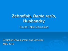 Zebrafish, Danio rerio, Husbandry, Egg to Egg, the Do`s and Don`ts