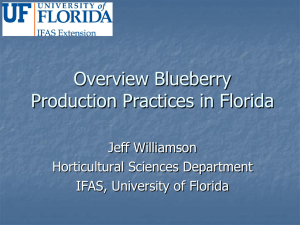 Blueberry Production ppt