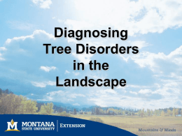 Diagnosing Tree Disorders