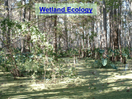 Wetlands - Nicholls State University