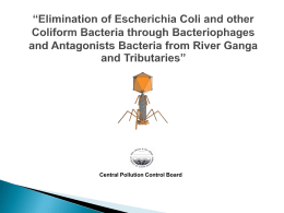 Elimination of escherichia coli and other coliform bacteria through