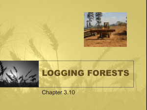 Logging Forests - Leo Hayes High School