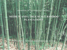 What is a medium or large scale bamboo plantation?