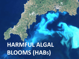 Harmful Algal Blooms (HABs)