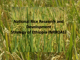 PPT - Rice for Africa