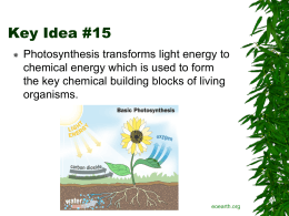 Photosynthesis and chemosynthesis 3134 3136 key idea 15 photosynthesis ccuart Images