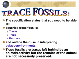 Trace Fossils - Geology Rocks