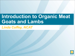 Introduction to Organic Meat Goats and Lambs