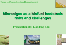Microalgae as a Biofuel Feedstock: Risks and Challenges