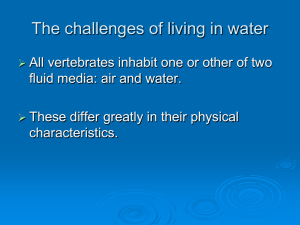 Topic 3 The challenges of living in water