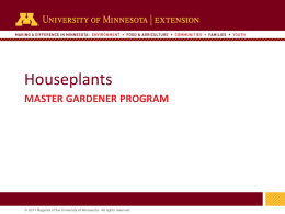 Houseplants - University of Minnesota Extension