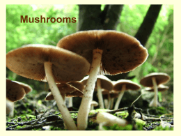 Mushrooms PowerPoint - Captain Planet Foundation