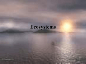 Ecosystems and Cycles