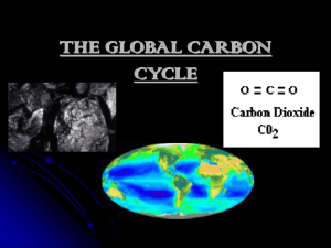 THE CARBON CYCLE?