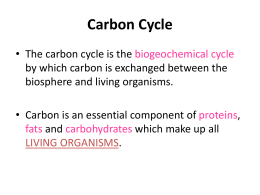NOTES: Carbon Cycle