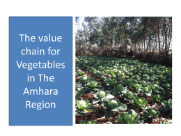 The value chain for Vegetables in The Amhara - LIVES
