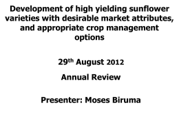 Development of high yielding sunflower varieties with desirable