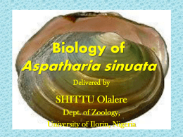 Biology of Aspatharia sinuata Diagram Slides only