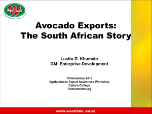 Avocado Exports The South African Story