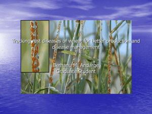Tracking rust diseases of wheat for better disease management and