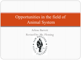 Opportunities in the field of Animal System